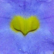 coração da flor